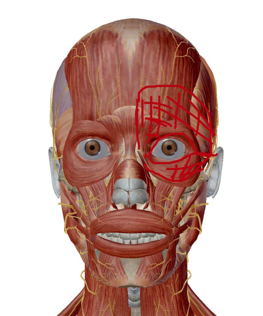 目の周り、奥の頭痛